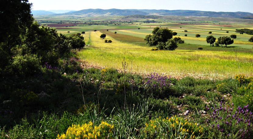 Cabaneros National Park