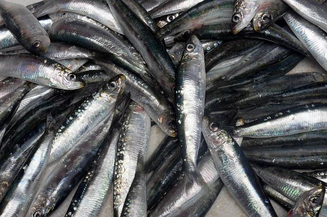 fish-porto