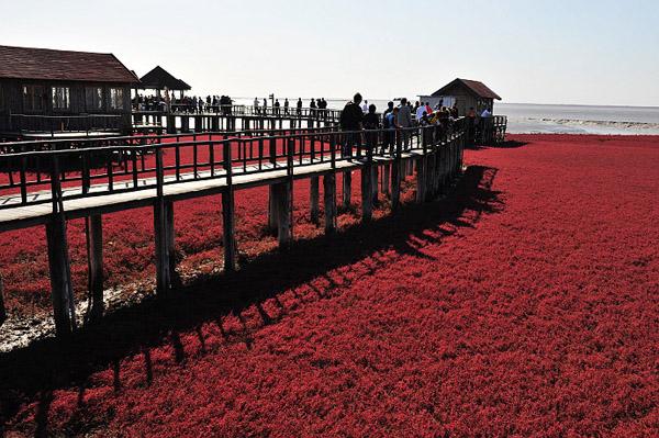 Panjin Red Beach, China3